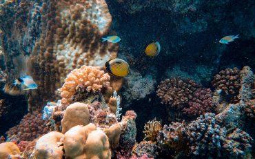aquatic-aquatic-animal-coral