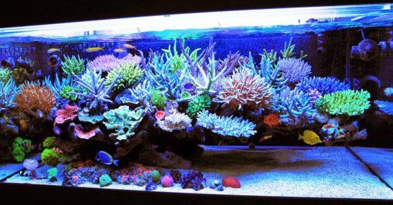Fish Tank Lights: Lighting Options for Your Aquarium