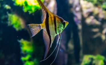 macro-shot-photography-of-yellow-and-black-fish-1677116