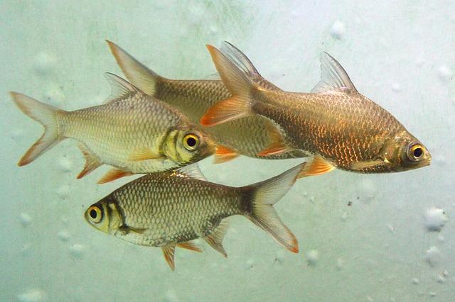 aquarium-20531 640