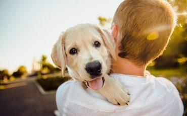 adorable-3344414 640